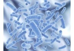Le microbiote : un rôle clé d'immunité